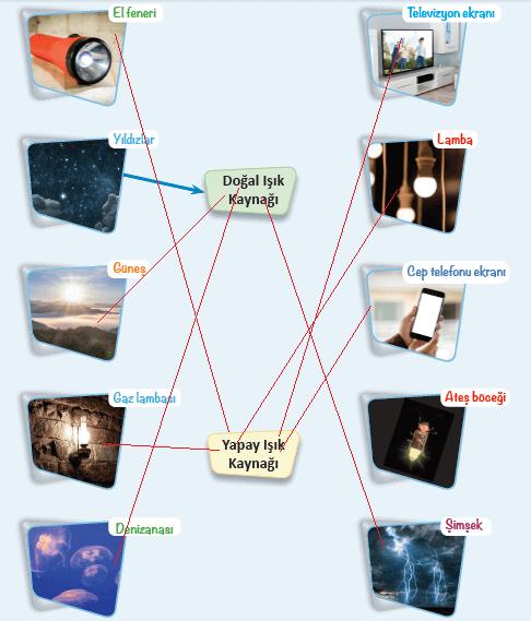 3. Sınıf Fen Bilimleri Ders Kitabı MEB Yayınları Sayfa 149 Cevapları