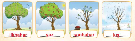 3. Sınıf Türkçe Ders Kitabı Sonuç Yayınları Sayfa 205 Ders Kitabı Cevapları