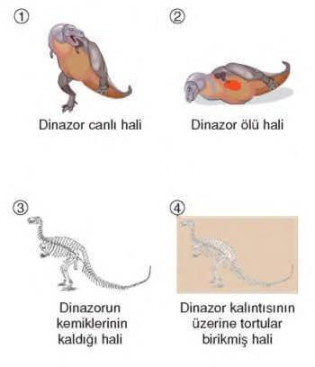 4. Sınıf Fen Bilimleri Fosillerin Oluşumu