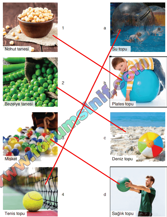 5. Sınıf Fen Bilimleri SDR Dikey Yayıncılık Sayfa 19 Ders Kitabı Cevapları