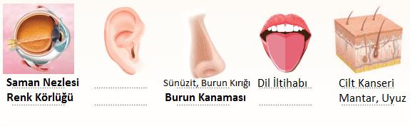 6. Sınıf Fen Bilimleri Sevgi Yayınları Sayfa 236Ders Kitabı Cevapları 3. Soru