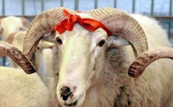 Kurban Bayramında Hangi Tür Hayvanlar Kesilebilir