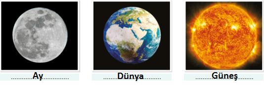 5. Sınıf Fen Bilimleri SDR Dikey Yayınları Sayfa 19 Ders Kitabı Cevapları