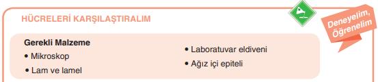7. Sınıf Fen Bilimleri Yıldırım Yayınları Yayınları Sayfa 39 Ders Kitabı Cevapları