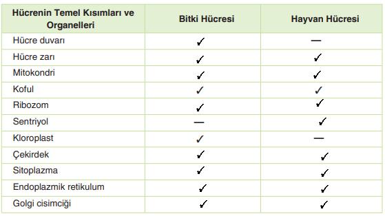 7. Sınıf Fen Bilimleri Yıldırım Yayınları Yayınları Sayfa 47 Ders Kitabı Cevapları
