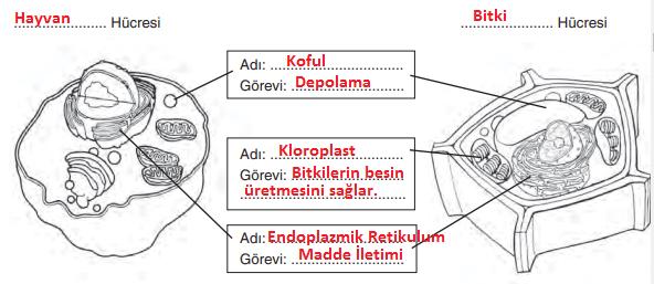 7. Sınıf Fen Bilimleri Yıldırım Yayınları Yayınları Sayfa 48 Ders Kitabı Cevapları